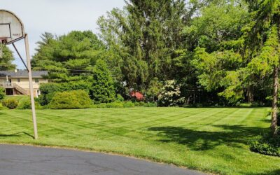 Muller Lawn Care and Design